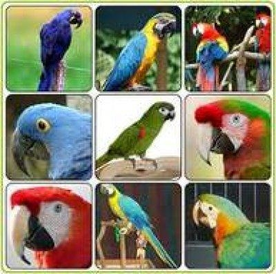 Pets For Sale OLX Karachi Free Classifieds OLX Ads